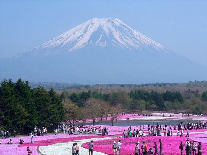 Цветущий парк Хицужияма (Япония)