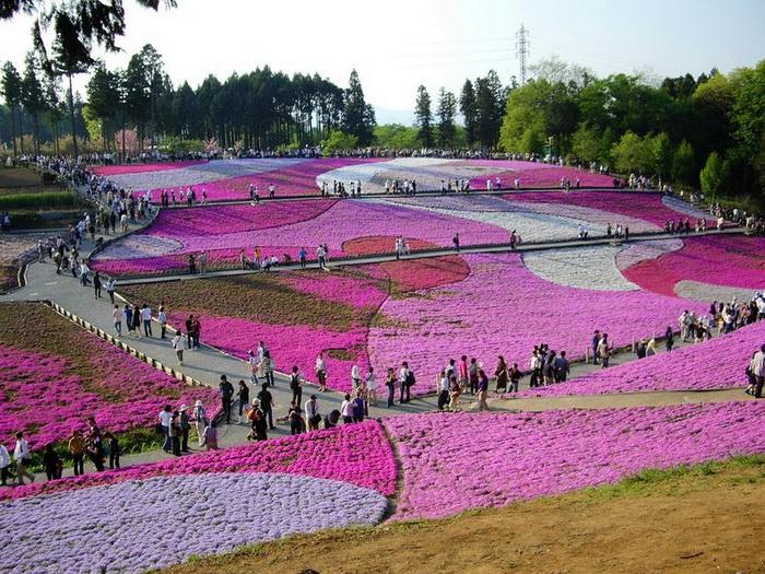 Полюбоваться цветами в парке Хицужияма съезжается множество туристов
