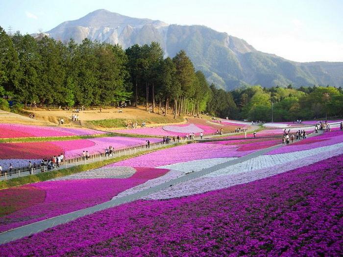 Ковры из цветов в парке Хицужияма (Япония)