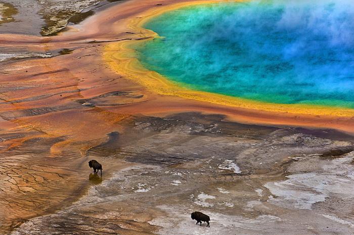 *Бизоны и Большой призматический источник*, фотограф Lukas Gawenda