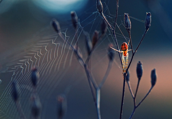 *Паук из другого мира*, фотограф Krasimir Matarov