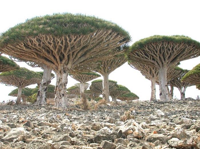 Остров Сокотра с удивительной флорой и фауной