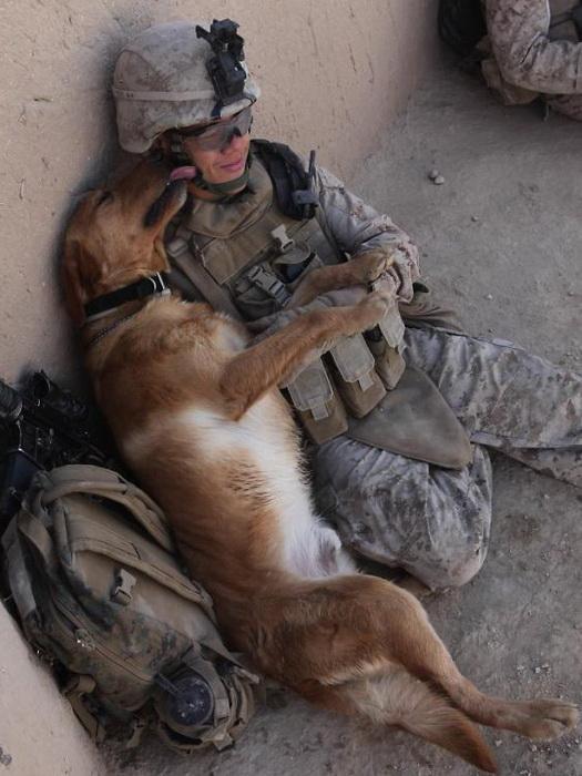 Минуты отдыха с боевым товарищем