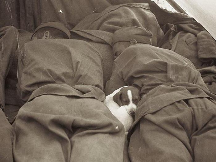 Советские солдаты спят с щенком