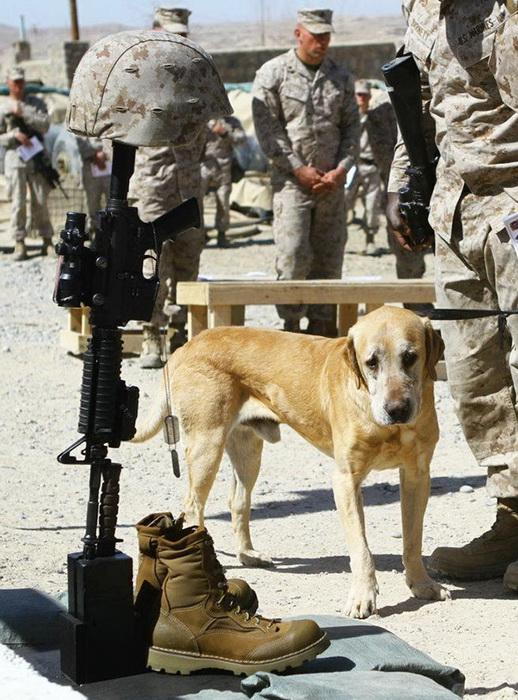 Пес прощается со своим другом-солдатом