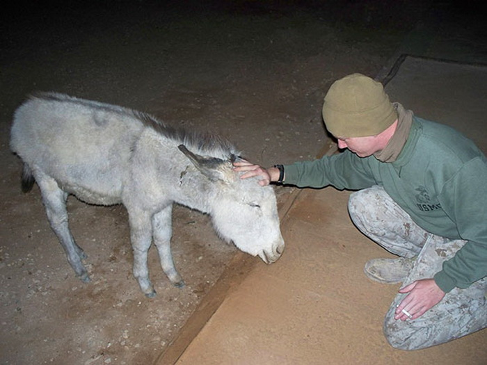 Ослик - любимец полка. Война в Ираке