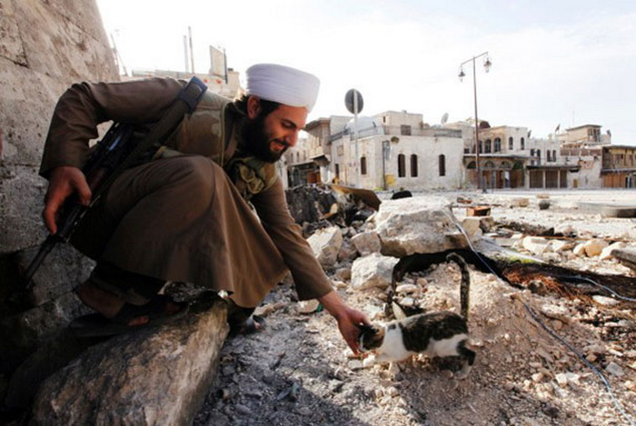Солдат и котенок посреди руин