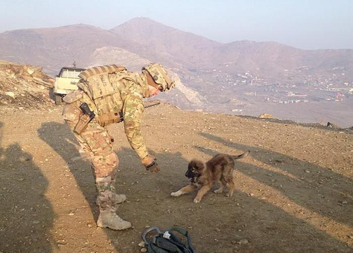 Игривый пес в горах Афганистана
