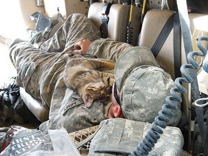 Бездомный котенок. Афганистан, 2009 год