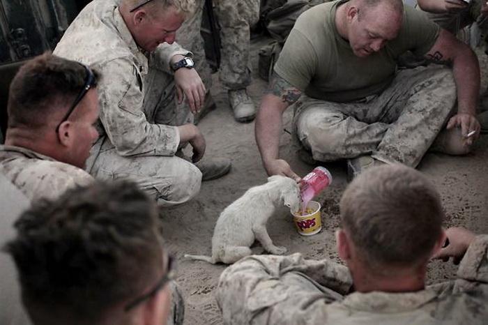 Морпехи кормят завтраком бездомного щенка