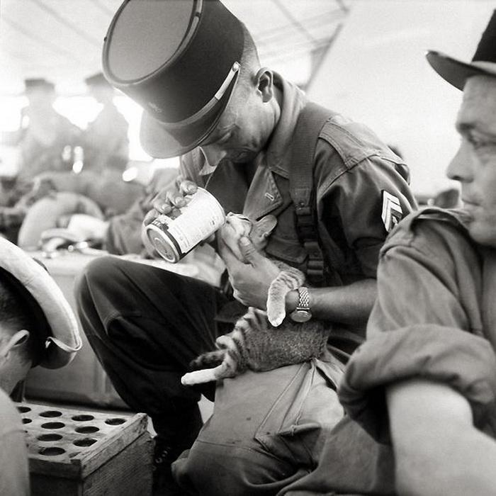 Французский солдат кормит котенка на войне во Вьетнаме