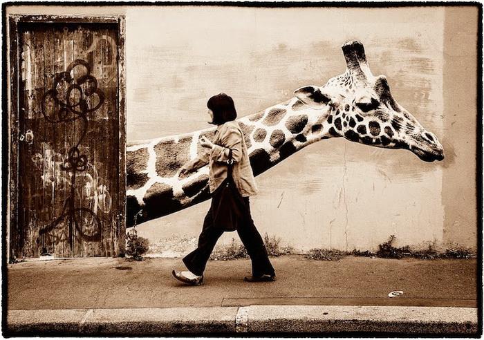 Дикие звери на улицах Парижа