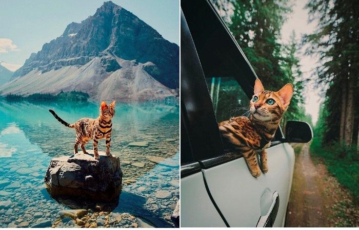 Кошка-путешественница - новая звезда Инстаграм.