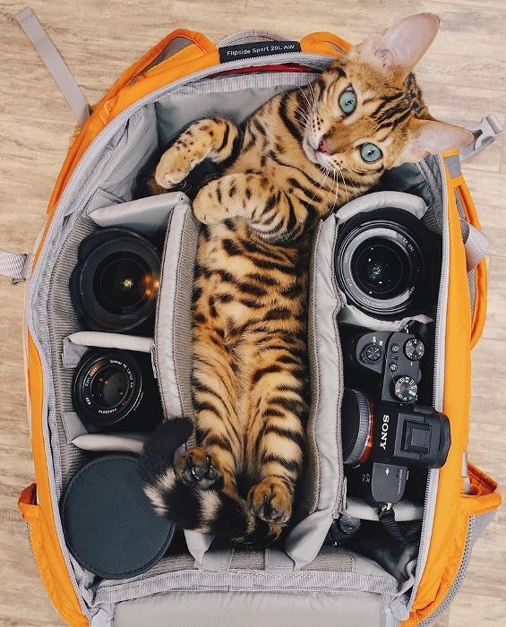Кошечка - настоящая фотомодель.