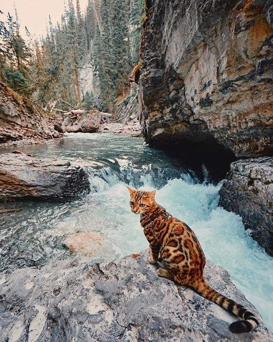 Горные реки кошку не пугают.
