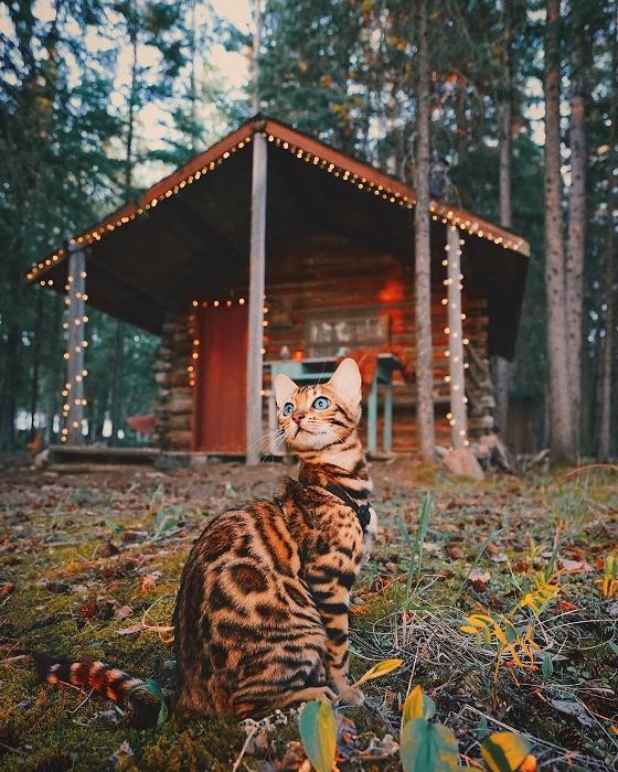 Кошка-путешественница охотно позирует для фото.