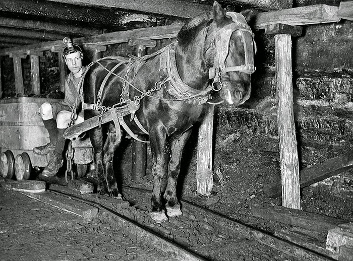 Лошади на одной из английских шахт