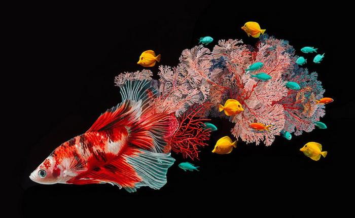 Сюрреалистические рыбы: творчество художницы Лизы Эриксон