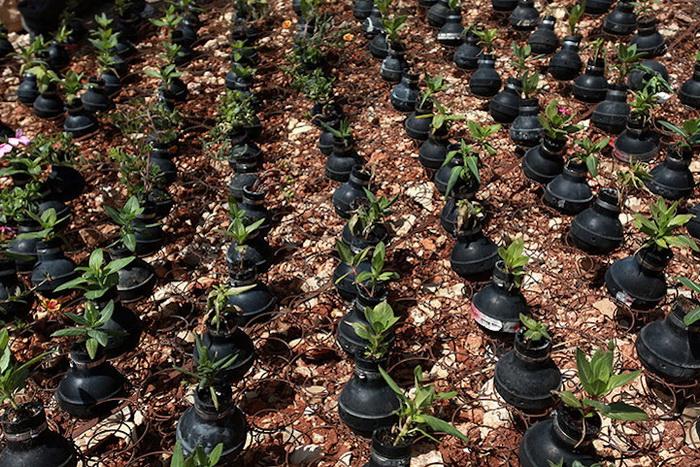 Сотни цветочных горшков в память о погибших палестинцах