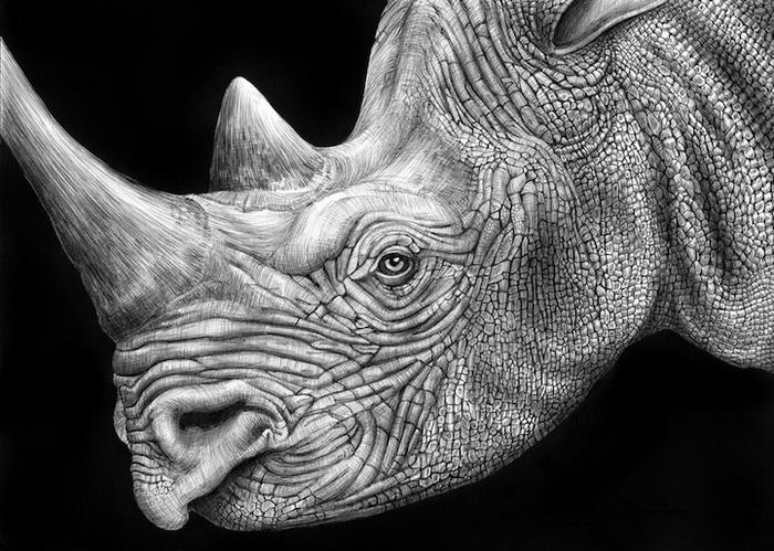 Портреты животных от Тима Джеффса