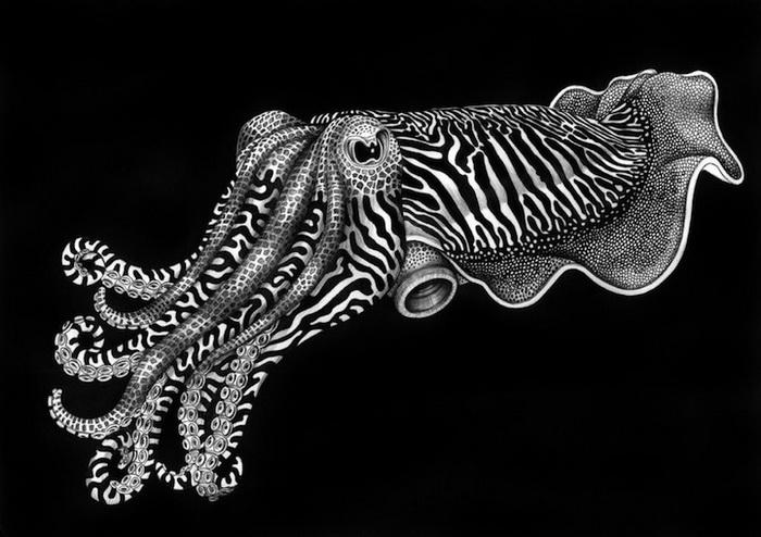 Тим Джеффс рисует диких животных