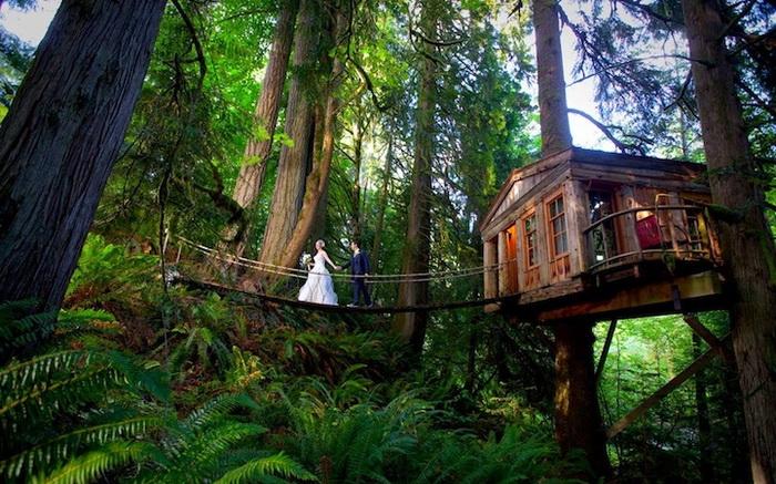 Отель на дереве (Сиэтл, США)