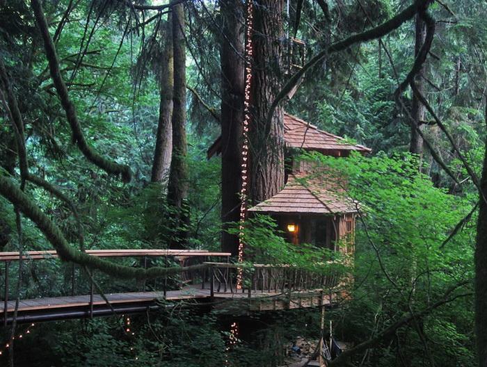 Отель на дереве - романтичное место для отдыха