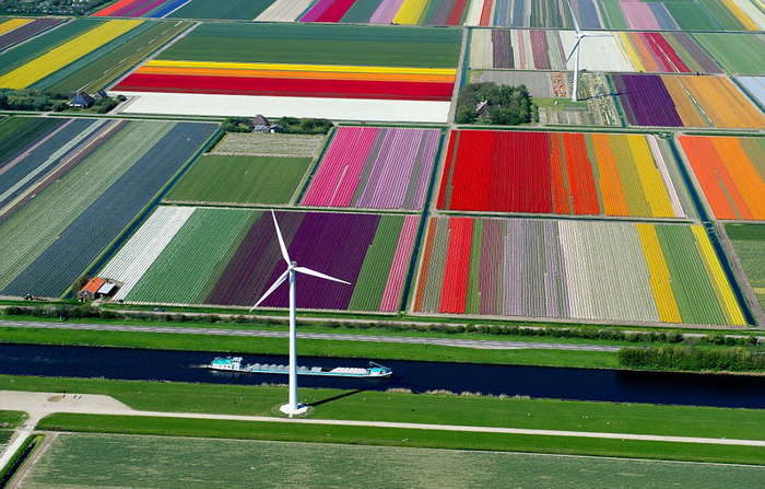 Цветочные поля.