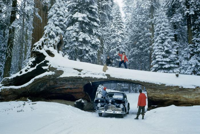 Тоннель в огромном дереве