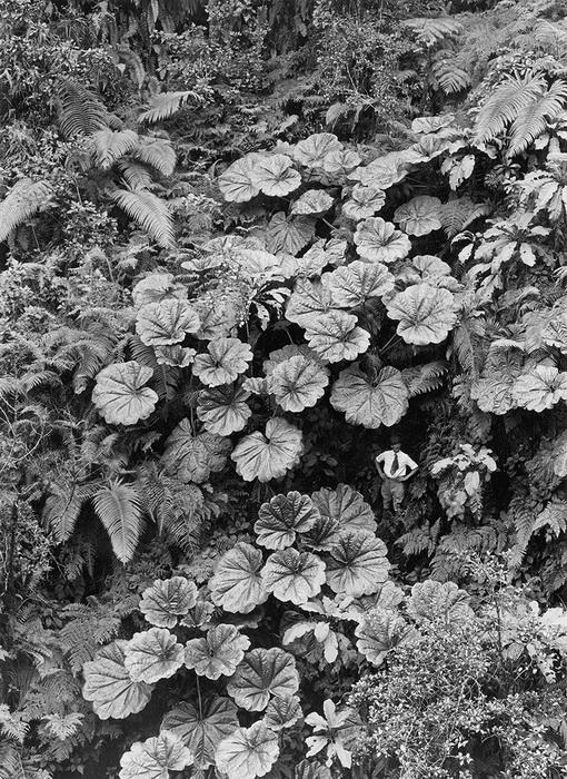 Мужчина среди гигантских растений
