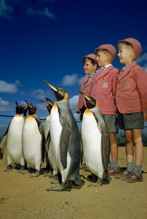 В лондонском зоопарке мальчики в школьной форме позируют с пингвинами