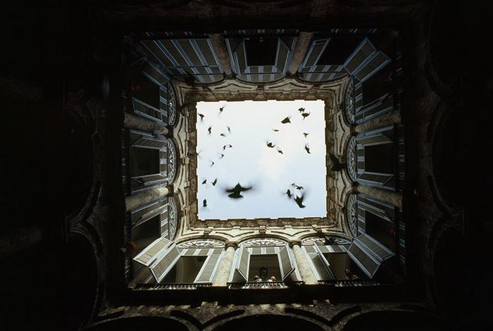 Птицы взмыли в небо