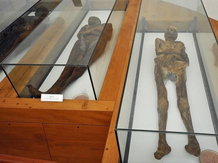 Мумии стали музейными экспонатами.