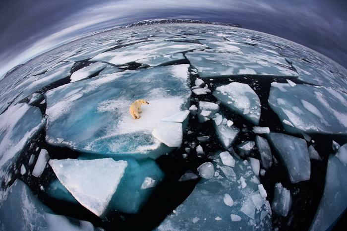 Anna Henly. Лучшие фотографии дикой природы-2012