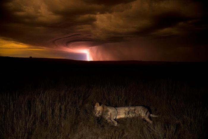 Hannes Lochner. Лучшие фотографии дикой природы-2012