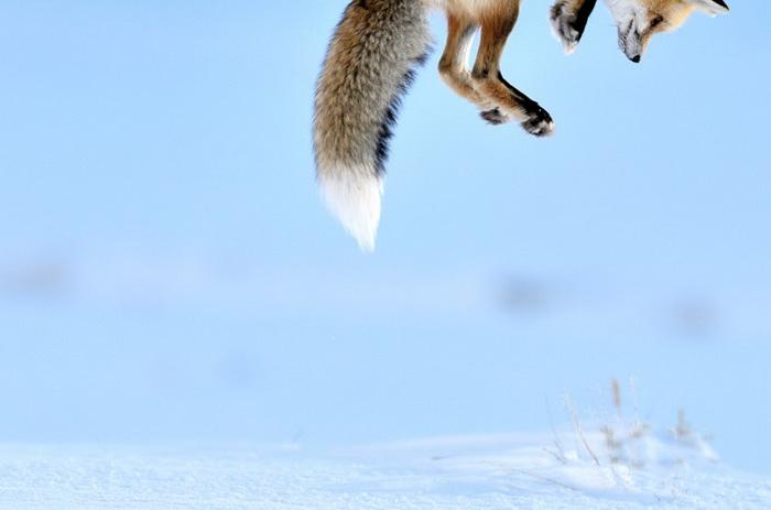 Richard Peters. Лучшие фотографии дикой природы-2012