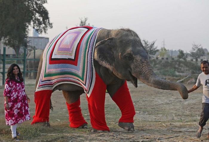 Свитера для слонов: вязаные наряды, чтобы согреть животных