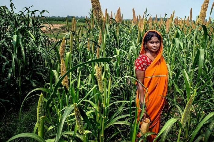 Саритадеви вынуждена ходить в поле, так как в доме нет туалета (Уттар-Прадеш, Индия)
