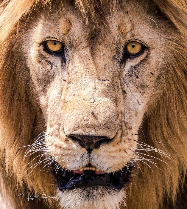 Занзибарское сафари: фотографии дикой природы.