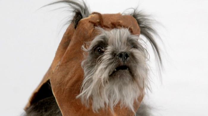 Собаки подражают героям известной саги