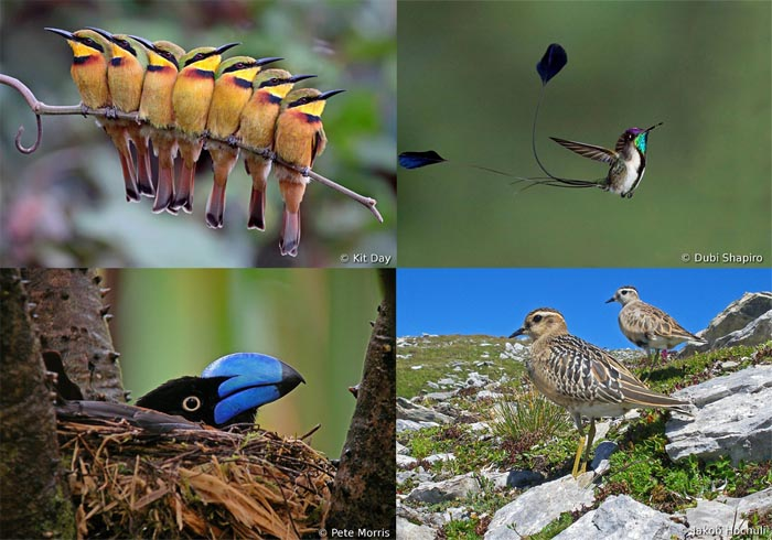 Четыре фотографии заслужившие специальные призы на конкурсе World Bird Photo Contest
