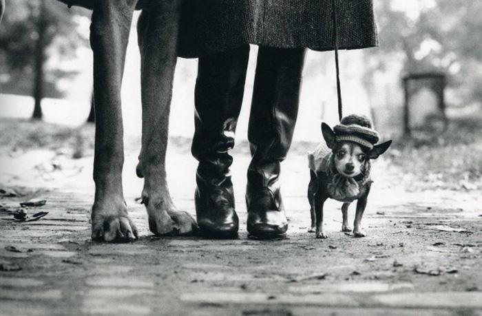 Одна из самых известных фотографий Эллиотта Эрвитта