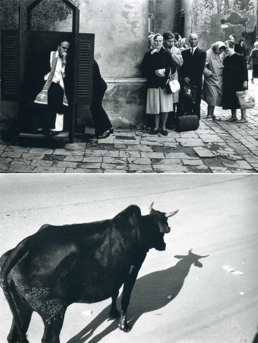 Эллиотт Эрвитт - фотограф с чувством юмора