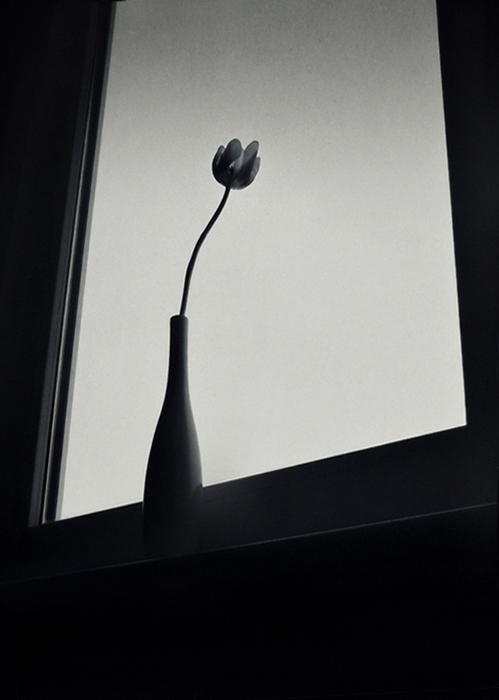 Фотография из серии снимков *Как лук* Сильвии Георгиевой