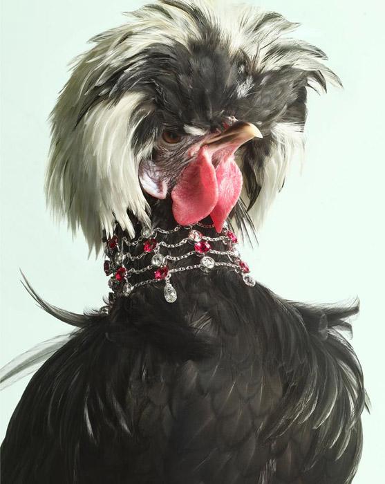 Фотограф Peter Lippmann создал удивительную серию фотографий Luxury Chicks