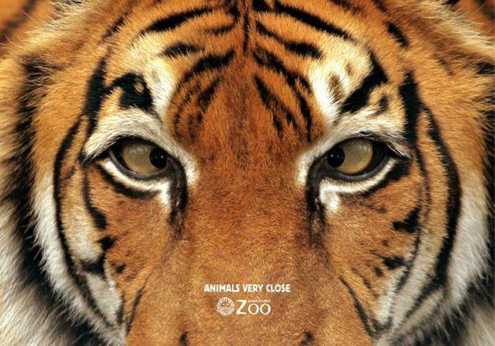 *Животные совсем близко* рекламный плакат Buenos Aires Zoo