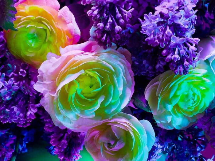 Фото цветов от Торкила Гуднасона