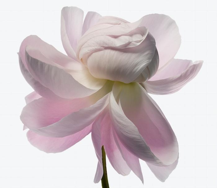Фото из цикла Big Blooms