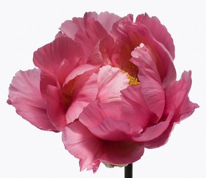 Big Blooms Пауля Ланге