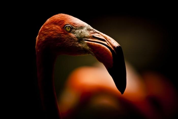 Фламинго. Фото: Michael Patrick O'Leary